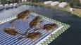 waargebeurde foto van dode vogels op zonnepanelen