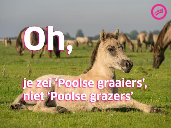 Poolse Konikgraaier