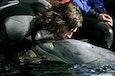 FOTO: de beroemde schaatser Gerald van Vemde heeft seks met een dolfijn