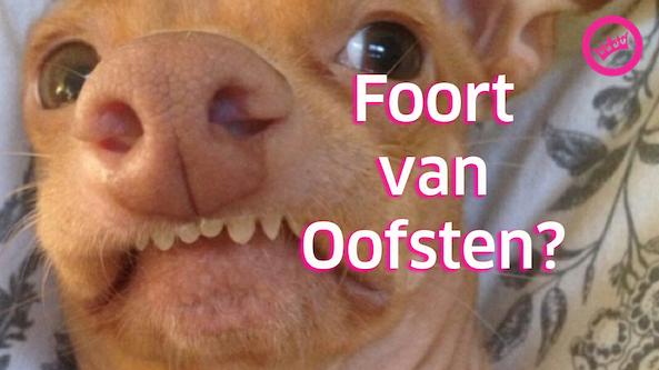 Pfoort pfan Oofsten?