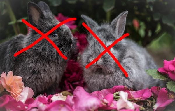 niet de konijnen in het verhaal