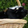 Dit is geen marmot. Ook is het niet Willy Dobbe.