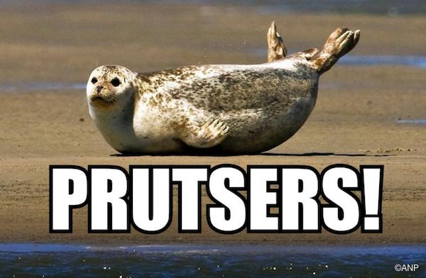 wat die zeehond zegt