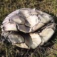 buurman mogen wij onze bal terug van Wodan